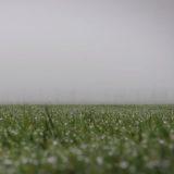 pelouse entrainement